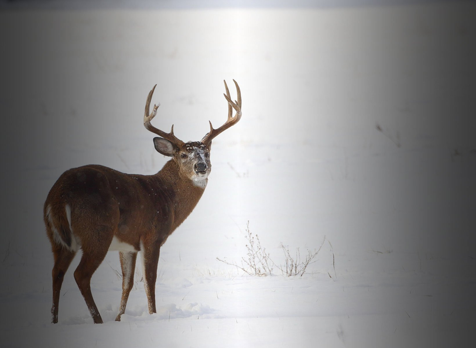 The Circle of Whitetail Masters - Big Buck Pressured Deer Pros