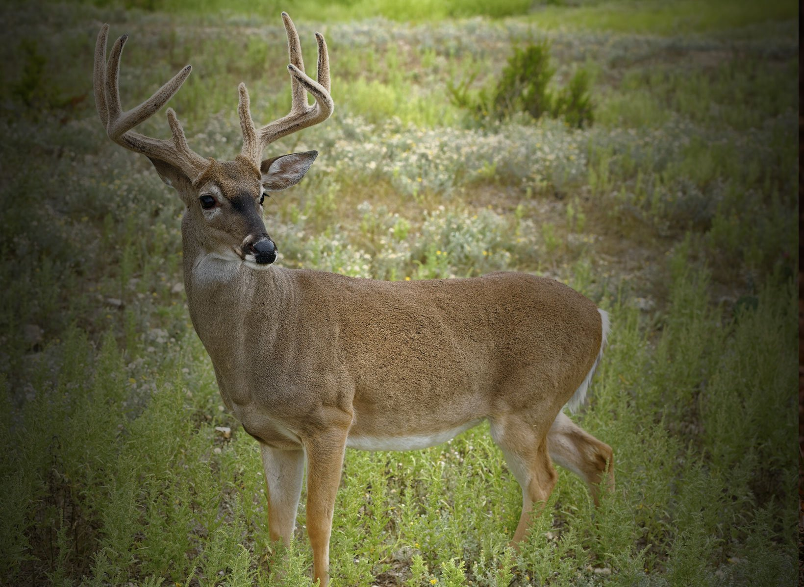 The Circle of Whitetail Masters Pressured Deer Pros Master Deer