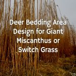 Deer Bedding Area Design for Giant Miscanthus or Switch Grass
