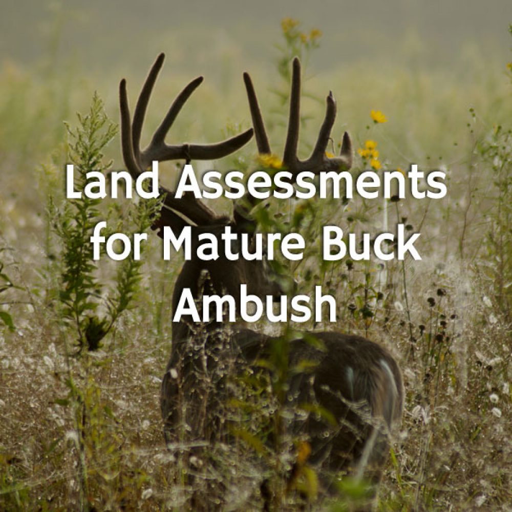Land Assessments for Mature Buck Ambush